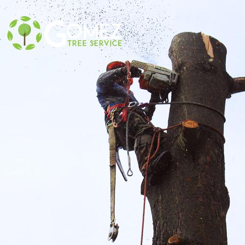 Gomez tree removal service
