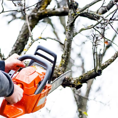 tree trimming houston 2