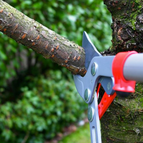 tree trimming houston tx